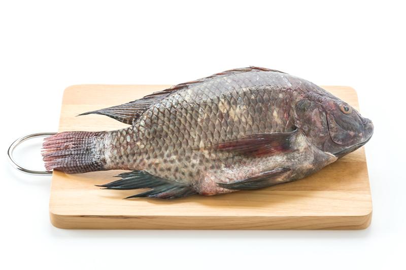 Cá rô phi