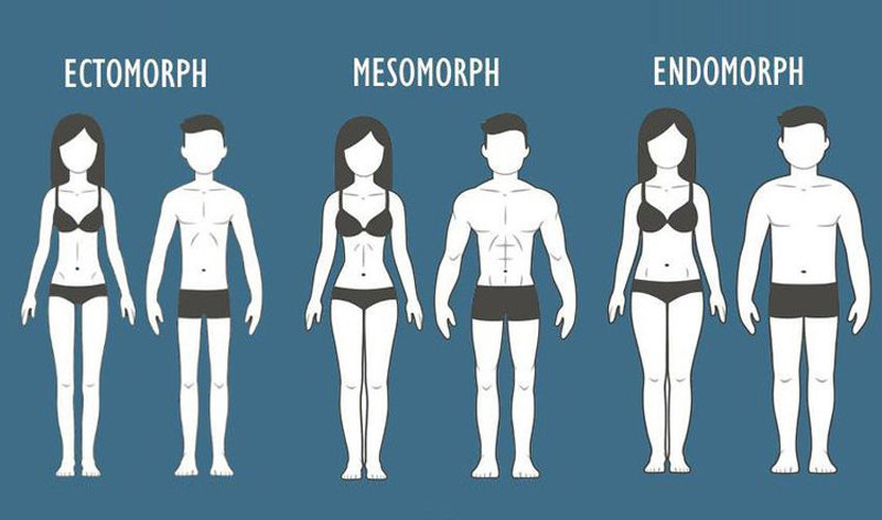 Tạng người Ectomorph là gì