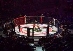 MMA là gì? UFC là gì? Những thú vị về MMA mà bạn chưa biết