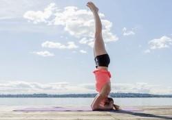 10+ Tác dụng của việc trồng cây chuối & Cách trồng chuối Yoga